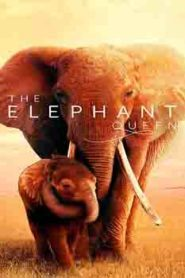 The Elephant Queen (2019) Hindi Documentary