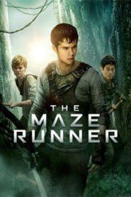 The Maze Runner (2014) Hindi Dubbed