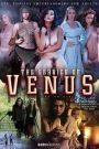 The Service Of Venus Parody (2019)